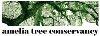 Amelia Tree Conservancy - North Florida Land Trust