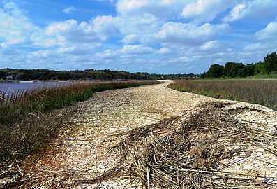 Spoil Island Restoration - North Florida Land Trust